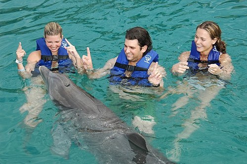 trumps kids swimming with dolphins